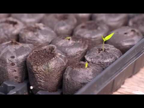 Oklahoma Gardening Episode (#4535) 3/2/19