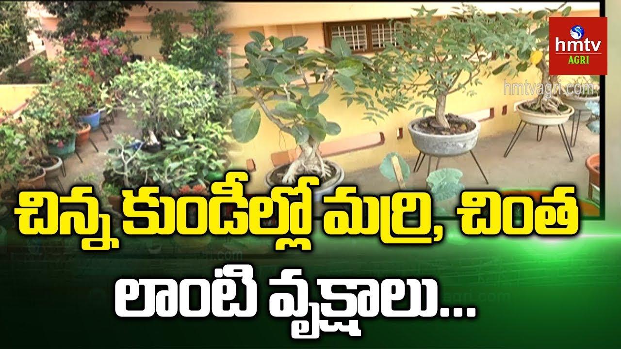 మిద్దె తోటలో భారీ వృక్షాల సాగు ? | Terrace Gardening | hmtv Agri