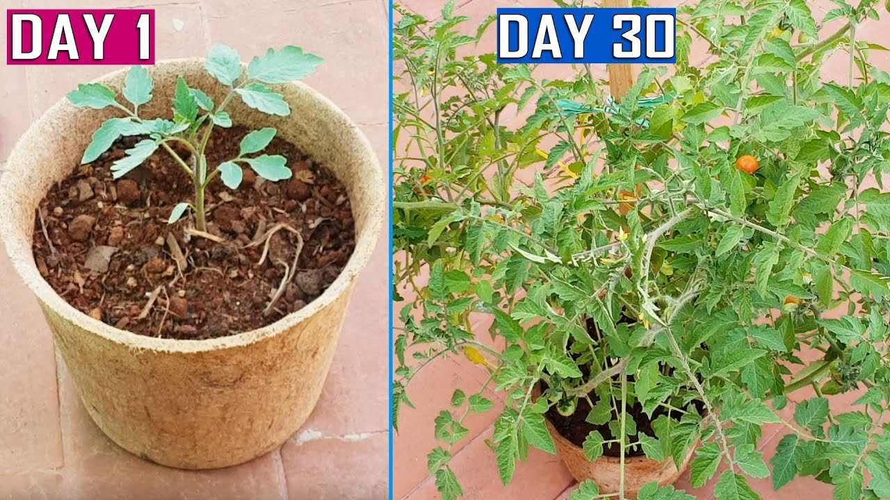 GROW PLANTS FASTER USING COCO COIR POTS & AIR PRUNING PRINCIPLE | Gardening Tips