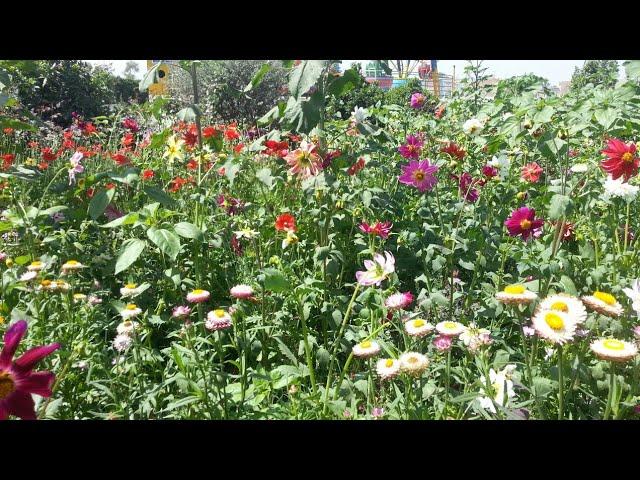 garden flowers || gardening