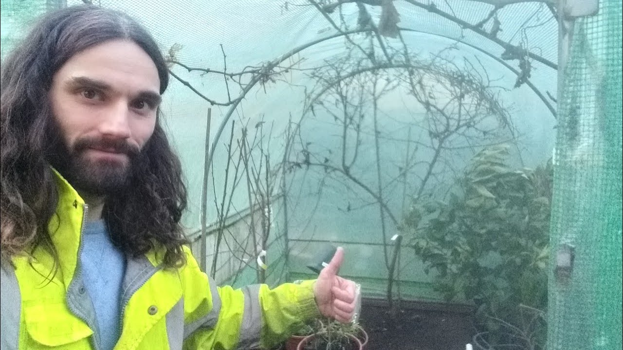 Winter gardening jobs! Tidying the polytunnel or greenhouse.
