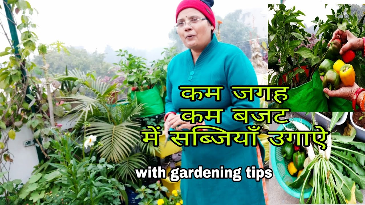 Harvesting vegetables(small space,low budget)with gardening tips कम जगह व बजट मे सब्जियाँ उगाऐ