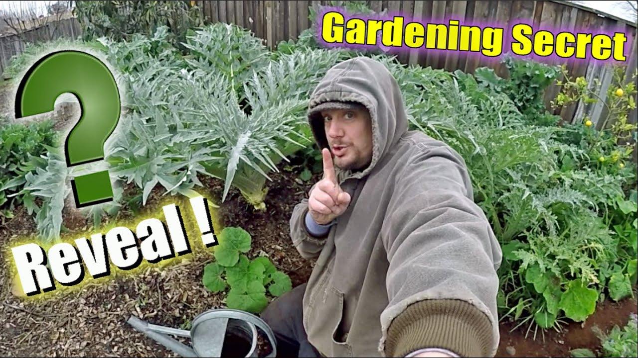 My Secret Garden Fertilizer Reveled! It's Like A Gardening Miracle!!