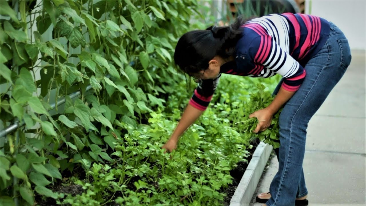 Mix crop vegetables in back yard gardening, practical experience~
