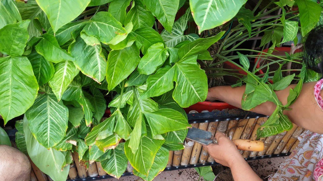 Saturday Garden Works    Weekend Garden Work    Fun Gardening