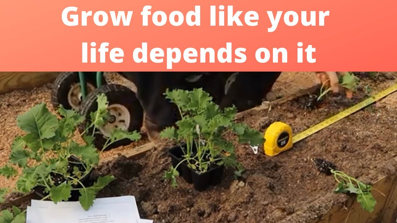 Grow food like your life depends on it   Mittleider Gardening Method