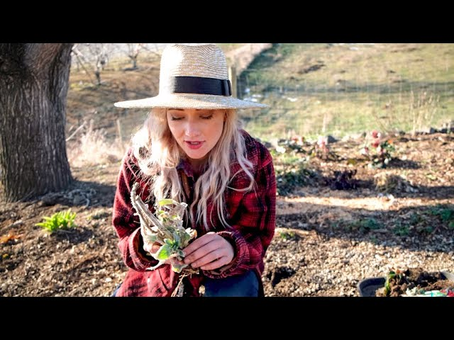Cottage Gardening On A Budget | Dividing & Transplanting Flowers | Using What You've Got!