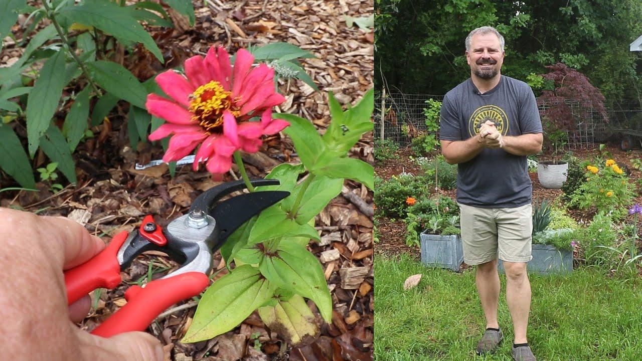 June Gardening and Landscaping Checklist