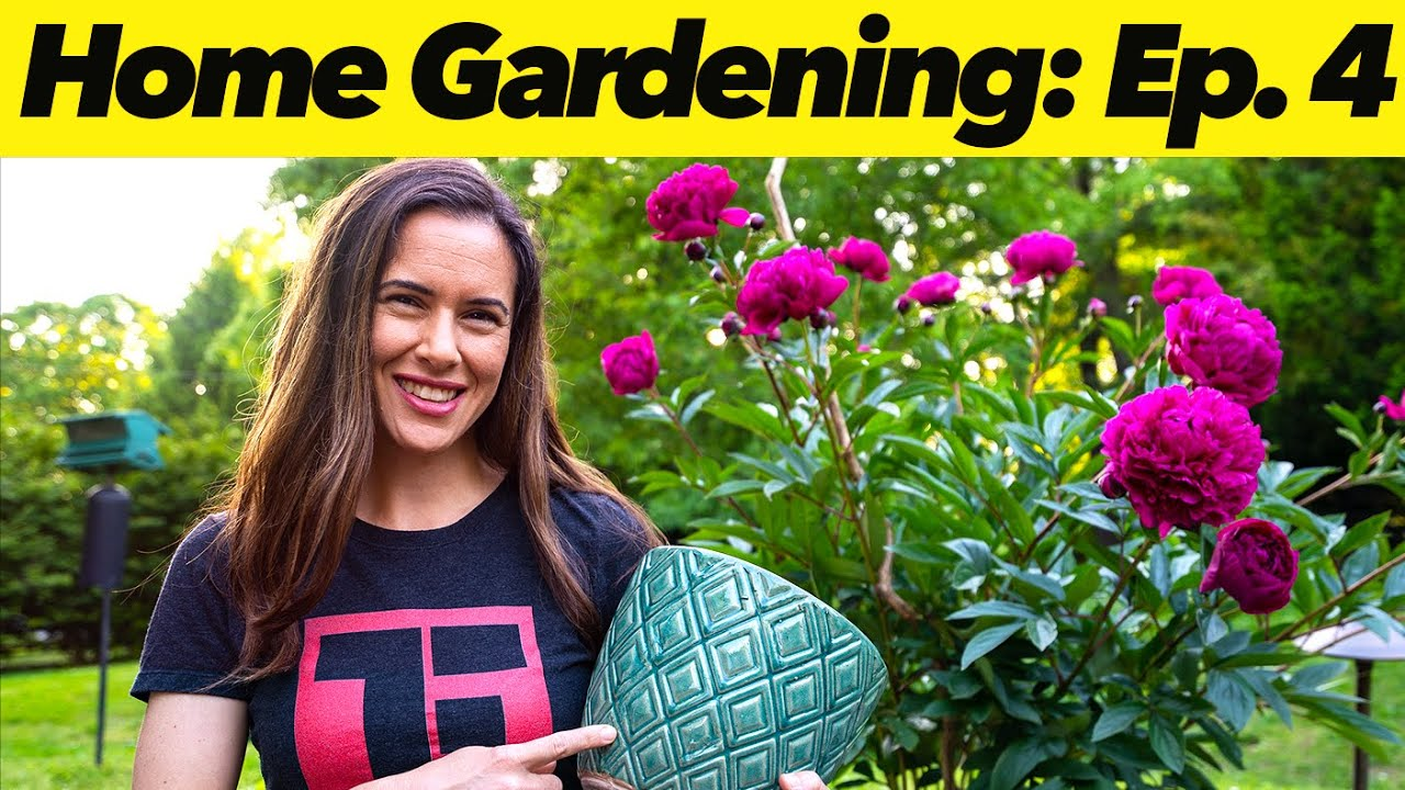 Container Growing for Small Spaces | Home Gardening: Episode 4