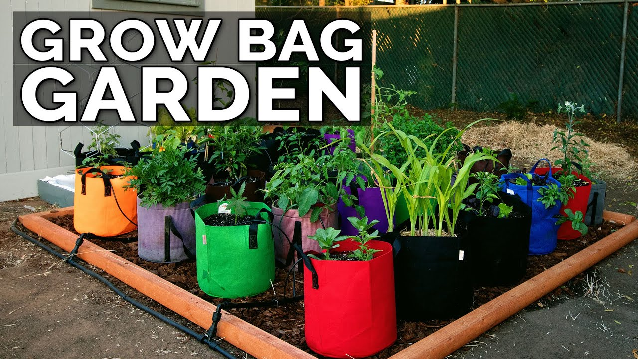 Start a Grow Bag Garden and Water It EASILY