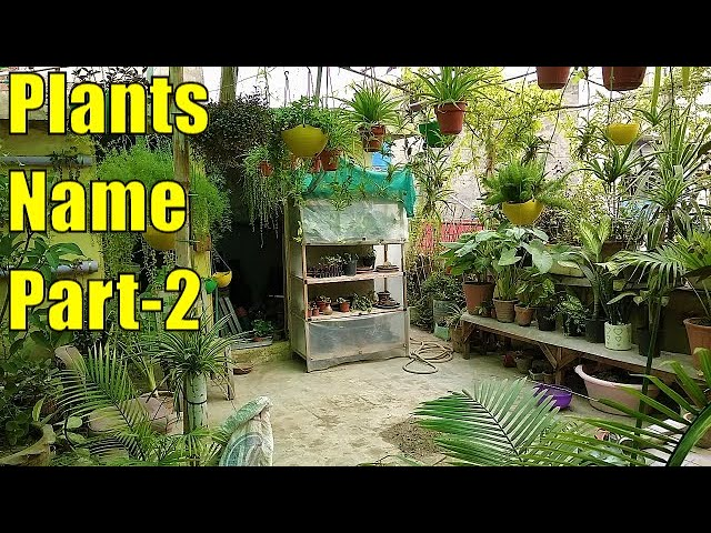 Mere Garden K Plants and Un K Nam Part-2 (27 June 2020 )