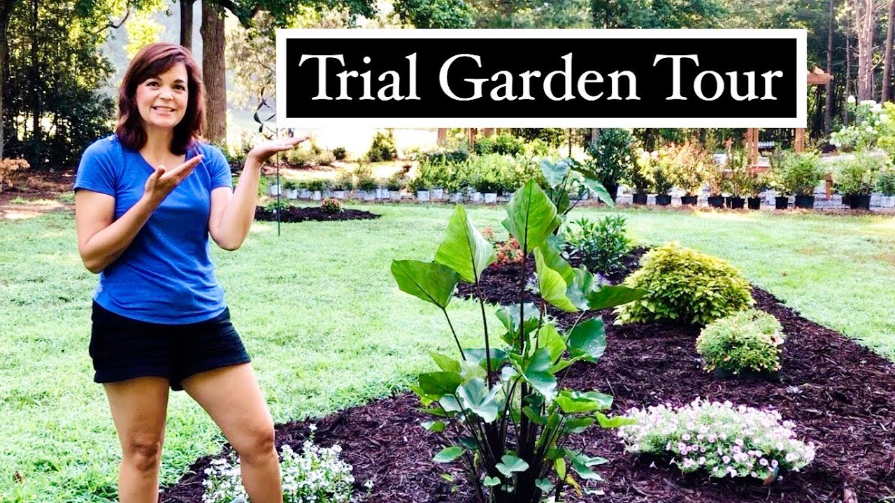 Garden Tour of New Annuals from Proven Winners // Gardening with Creekside