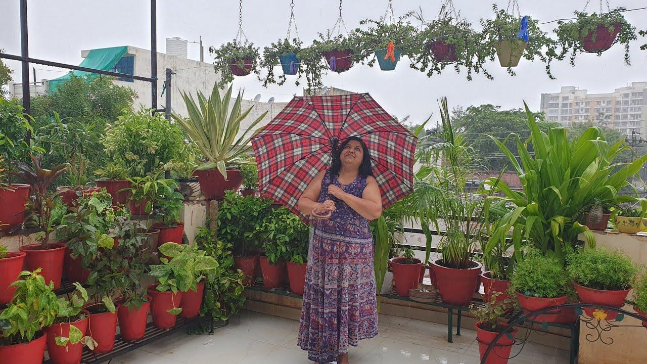 Rainy Day in My Garden || Fun Gardening