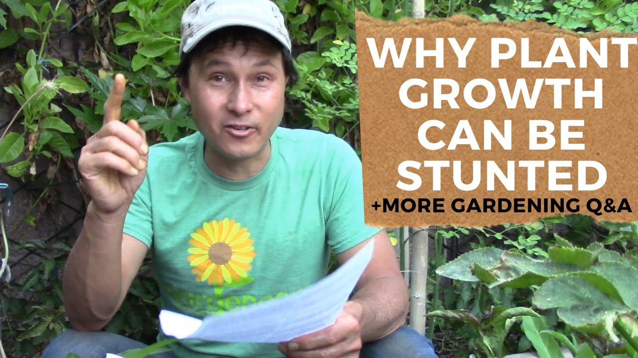 Why Aren't My Peppers Growing Fast? & More Organic Gardening Q&A