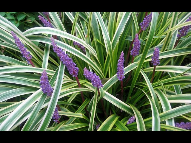 Low maintenance gardening with Grasses!/Garden Style nw