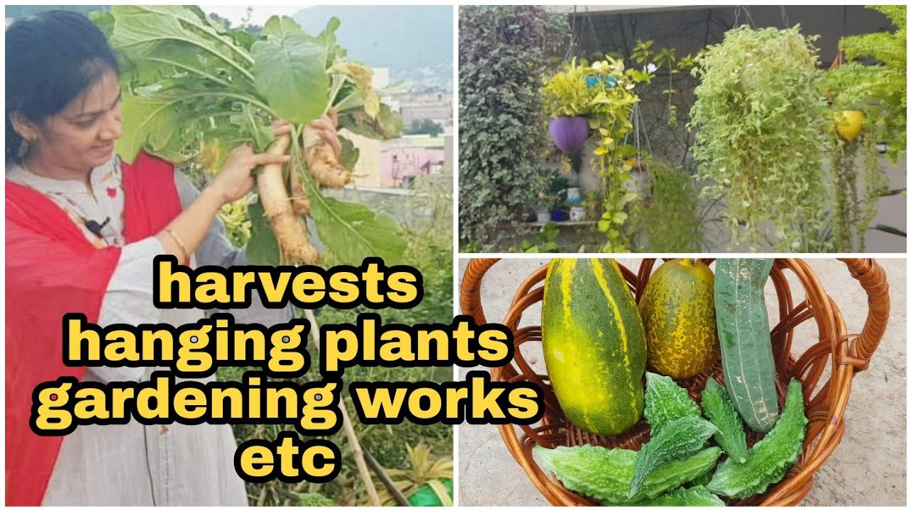Garden Update/ఈ వారం లో నేను చేసిన తోట పనులు ఏంటో చూడండి #gardening #terracegardening #madgardener