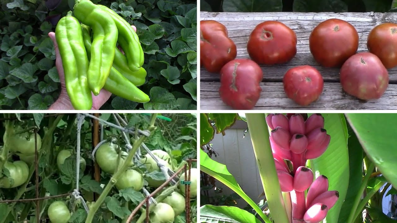 Late August Gardening Update - The Garden Is Still Producing