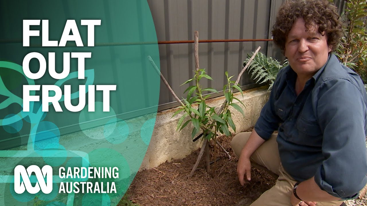 How to grow fruit flat out | Urban Farming | Gardening Australia