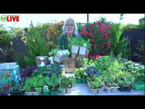 Winter Veggies Gardening Class LIVE with Kathy at Green Thumb Nursery