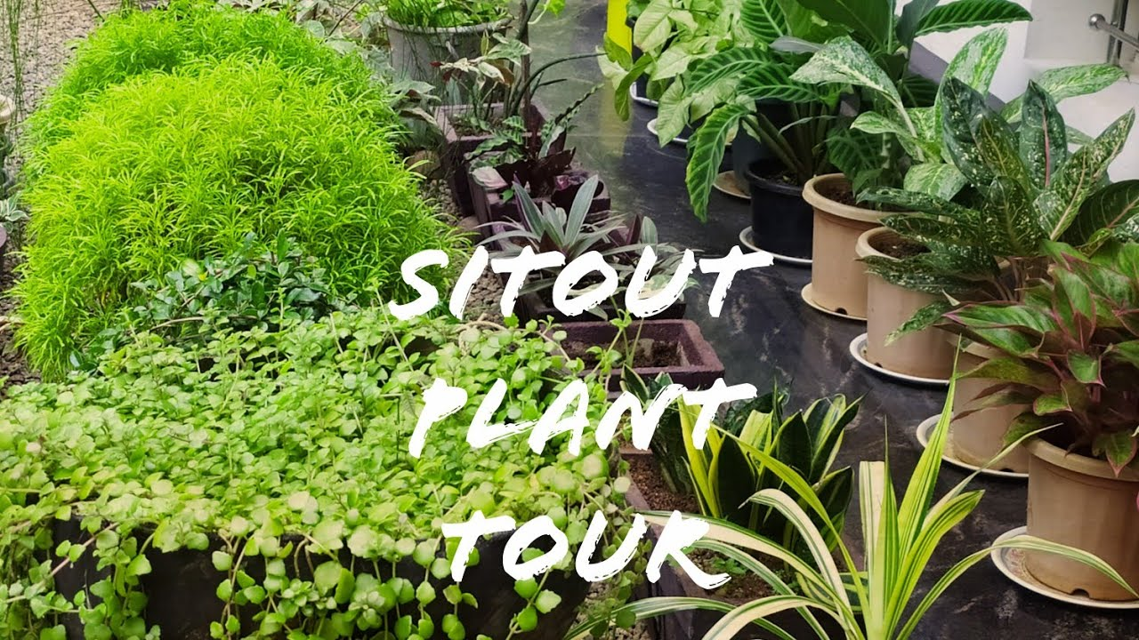 29 October 2020 Sitout plant tour/Best indoor and outdoor plants/Gardening malayalam.