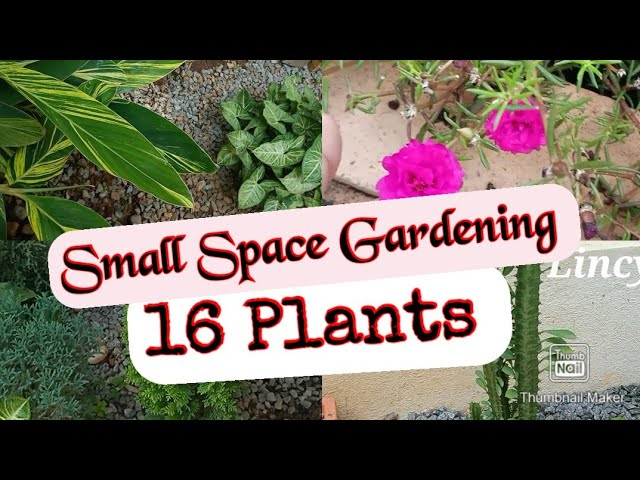 Garden Corner Tour l Small Space Gardening l How to make garden in small space l 16 Plants