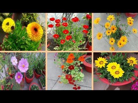 Winter Gardening Prepration🌸🏵🌼🏵🌸 / Sapling of Beautiful Common Winter Flowering Plants🌻🌼🏵💮🌸🌼🌻