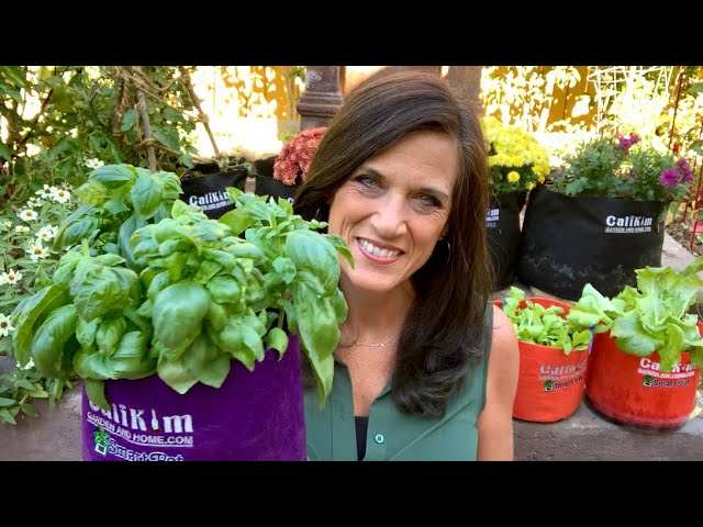 🍅LIVE: 4 Indoor Gardening Challenges and How to Solve Them (REPLAY)