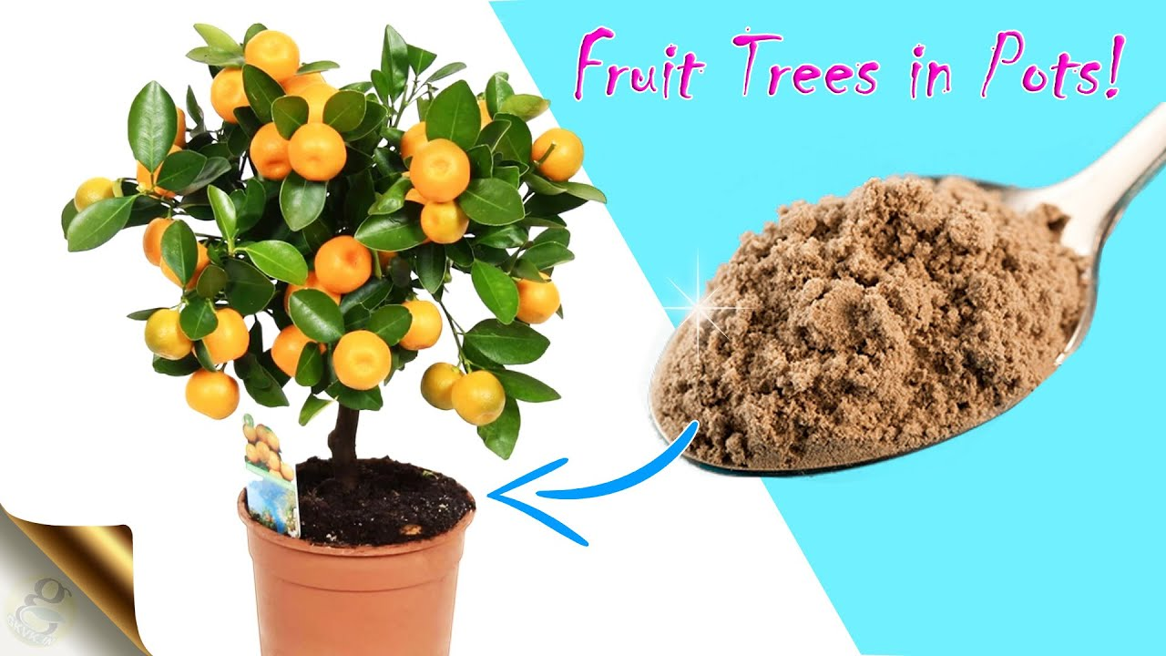 TRICKS TO GROW FRUIT TREES IN CONTAINER GARDENING