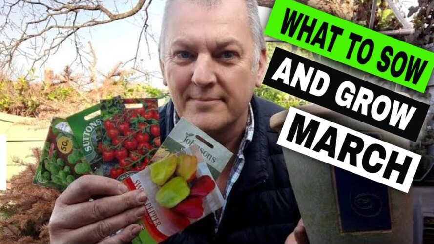 What to Sow and Grow in March UK | Vegetables | Flowers | Gardening Online