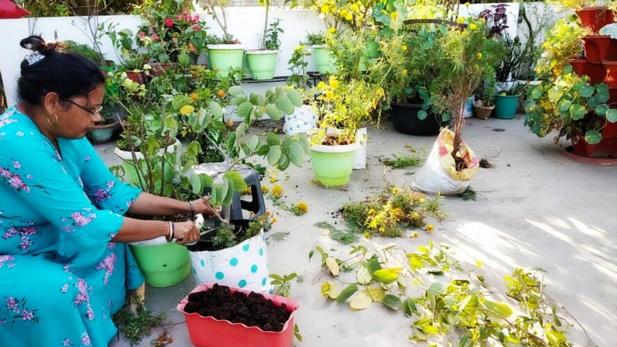 My Sunday gardening work Season change होने के साथ बढ़ा काम