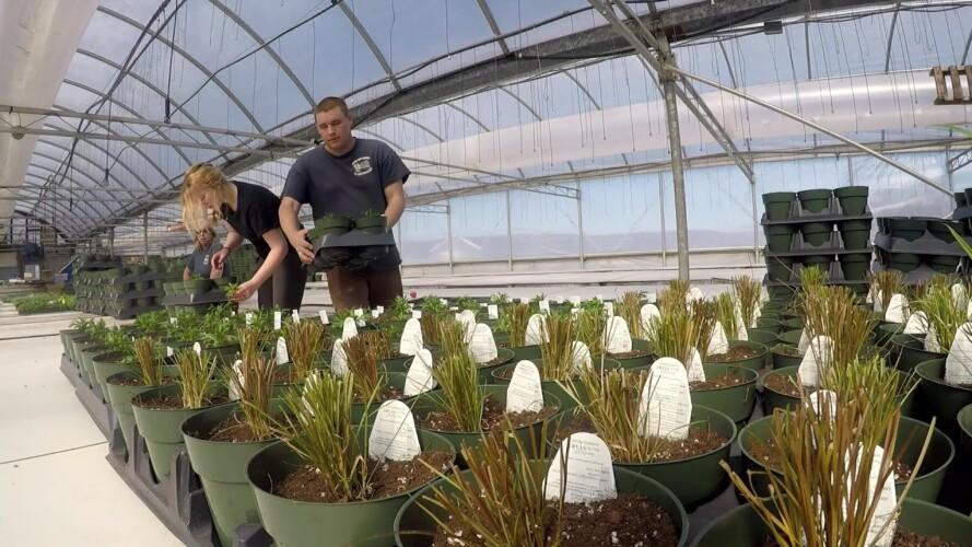 GREENHOUSE PLANTING BEGINS (GARDENING TIPS)