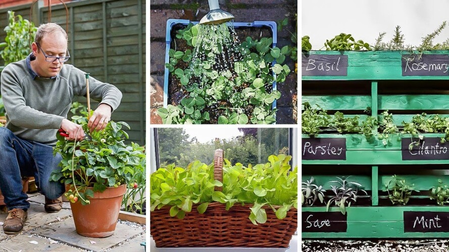 Clever Ways to Grow in Small Spaces: Container Vegetable Gardening for Beginners