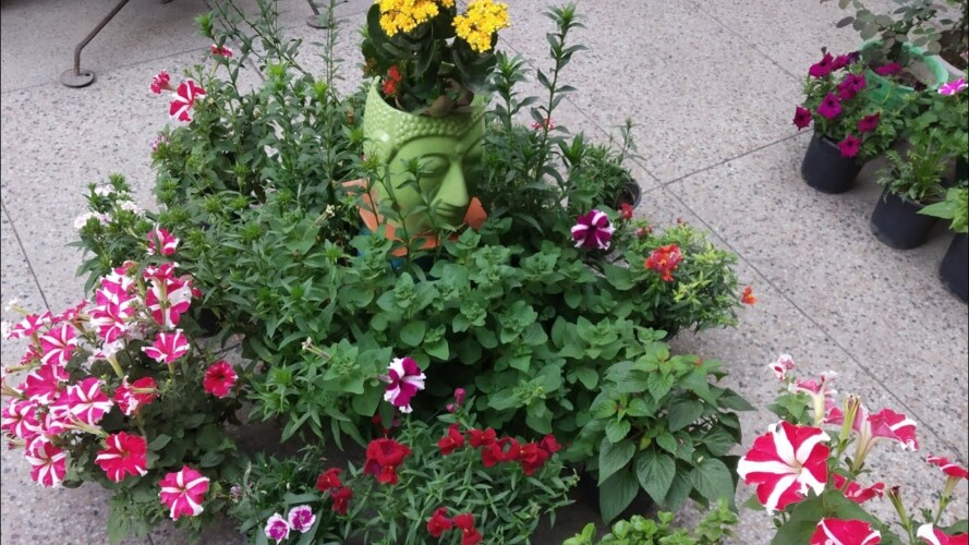 Gardening👉 की शुरुआत ऐसे करें // How to start gardening