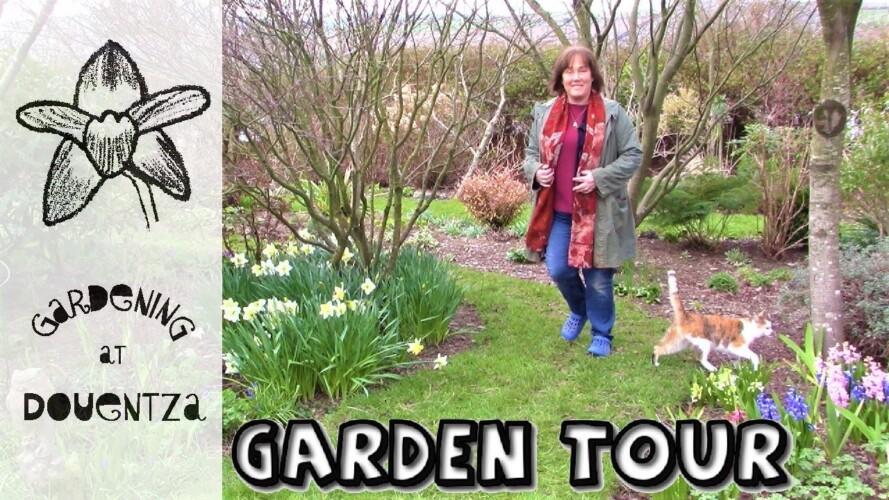 March Garden Tour - spring bulbs & gardening chat