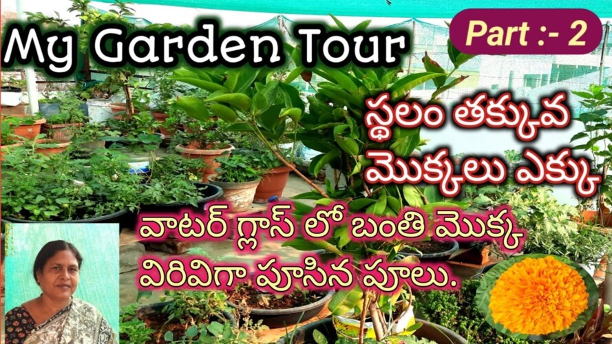 my garden tour | organic garden tour | organic gardening | organic vegetable gardening.