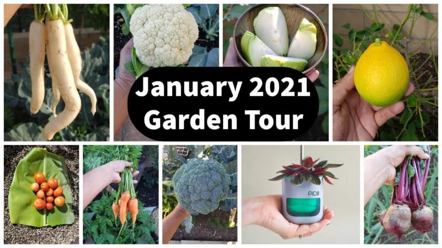 Full Jan 2021 Garden Tour - Vegetable Harvests, Gardening Tips & Grow Light Giveaway Winner!