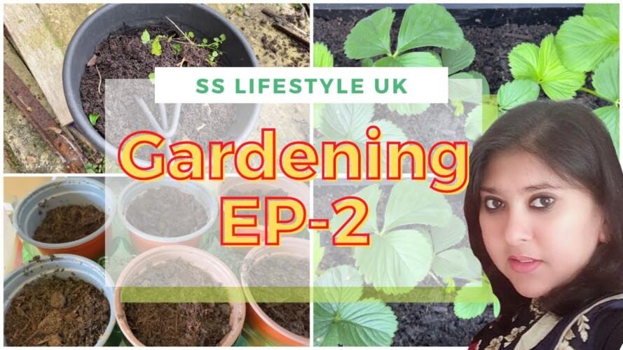 Gardening EP-2|| Planting || আজ কি কি গাছ লাগালাম !! || Uk vlog 167