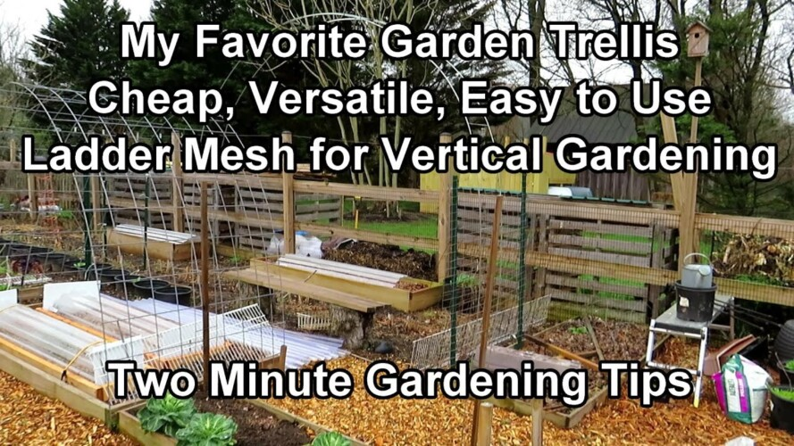 My Favorite Trellising Material for Vertical Gardening - Cheap & Easy to Use: Two Minute TRG Tips