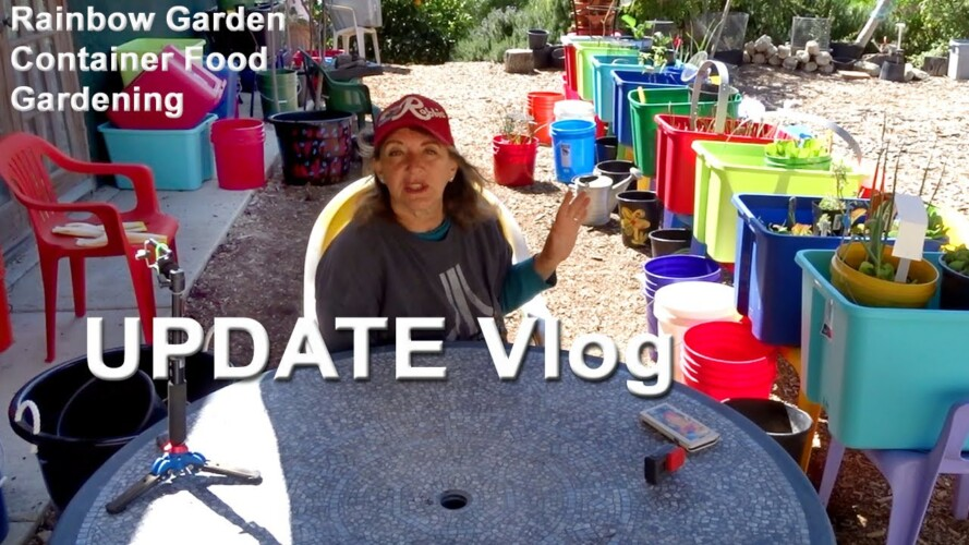Update Vlog on Rainbow Garden Container Gardening Vegetables, Food, Compost in Place, Starting Seeds