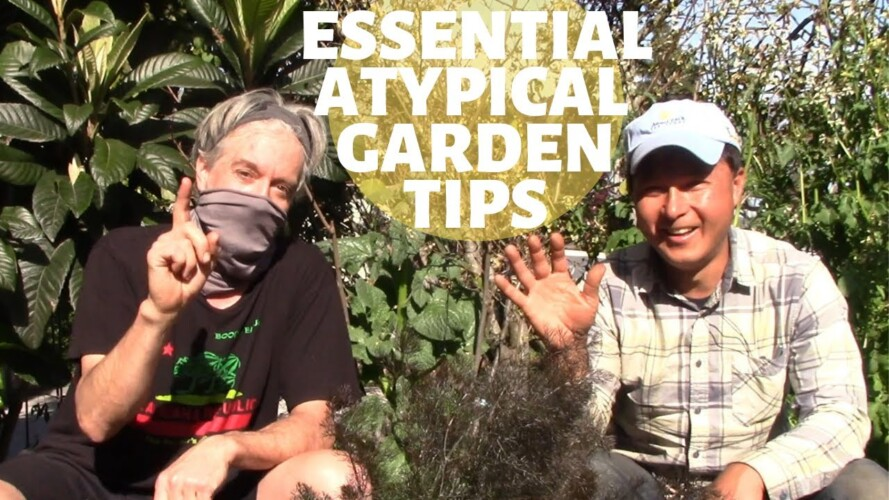 10 Atypical Organic Gardening Tips that Improve Every Garden