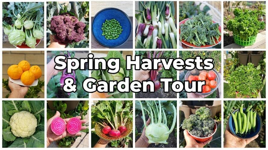 The California Garden - Spring Harvests, March 2021 Garden Tour, Gardening Tips & More!
