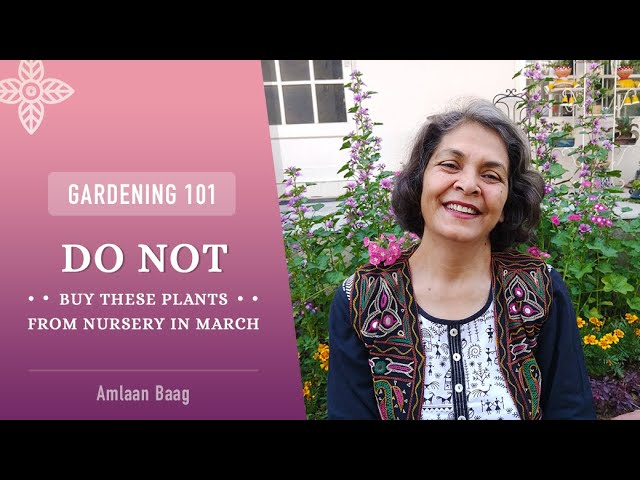 Gardening 101 | Do Not Buy These Plants From Nursery In March | इस समय नर्सरी से ये पौधे न खरीदें