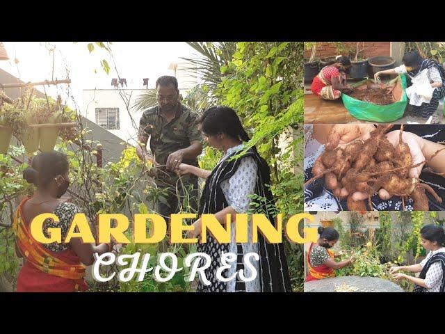 ఆదివారం ఇలా గడిచింది/Terrace Gardening Chores  #madgardener  #gardening