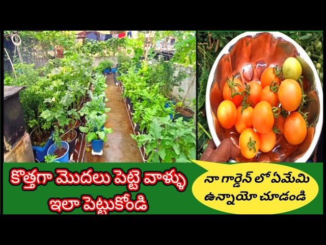 మిద్దేతోట ఇలా మొదలు పెట్టండి  || terrace gardening for beginners