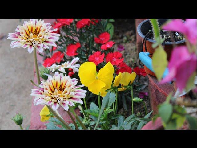 Gardening in March   पतझड़ और मेरा बगीचा   Prakriti's Garden