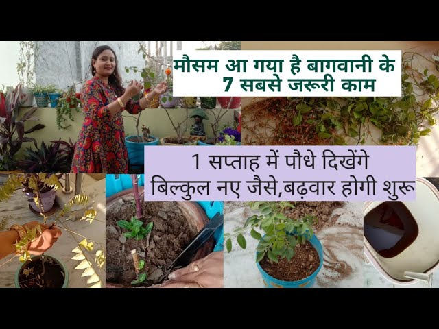 Gardening tips for March, what to do in garden in March,आज ही  करें पौधो में 7 काम