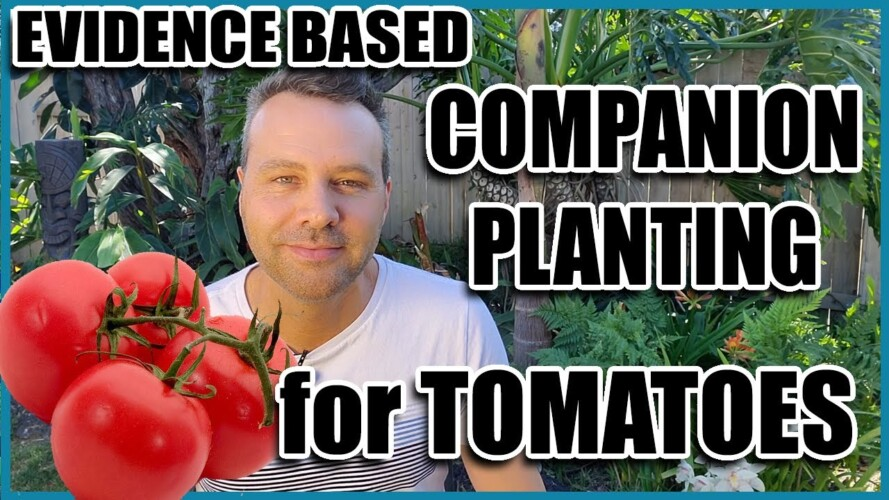 Companion Planting for Tomatoes (14 Evidence Based Planting Combinations)