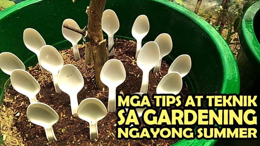 Mga Tips At Teknik Sa Gardening Ngayong Summer