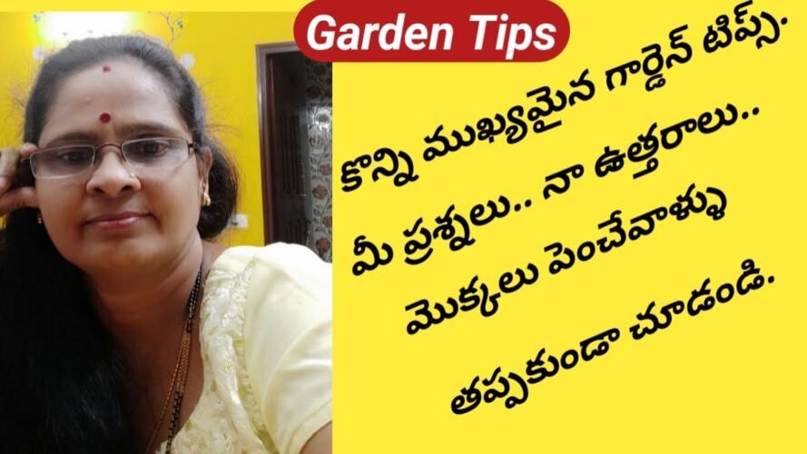 మీ ప్రశ్నలు౼నా సమాధానాలు/How to Save Plants/Imp Gardening Q & A/ Episod 1.