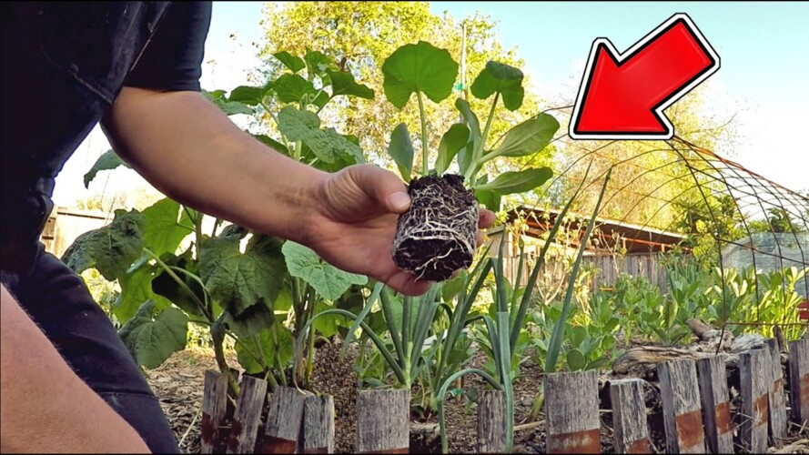 Some Gardeners Will Get Upset That I'm Sharing This Secret Gardening Tip With You ?!?!